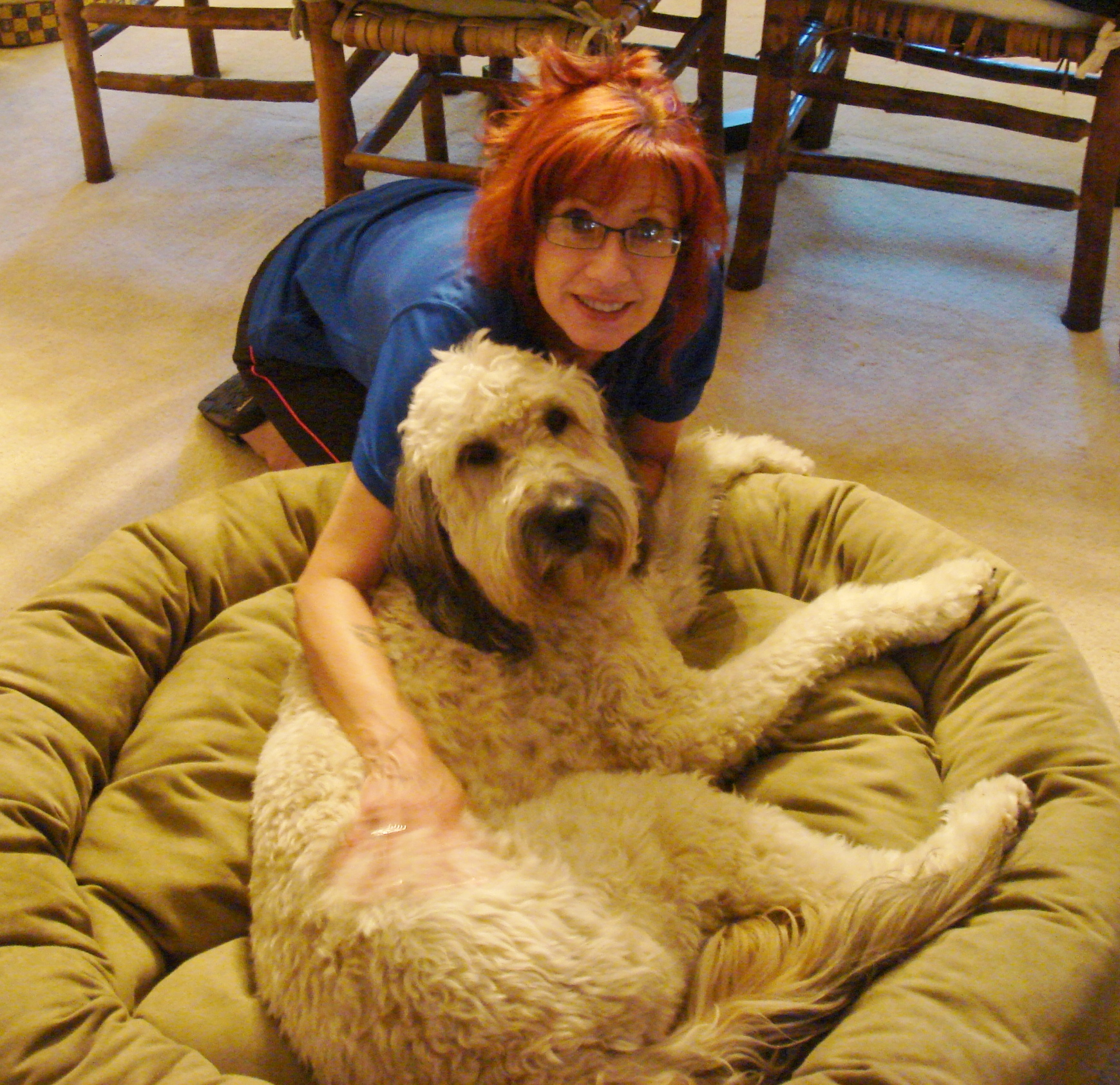 TUNDRA, a happy-go-lucky, unbelievably sweet Goldendoodle.
